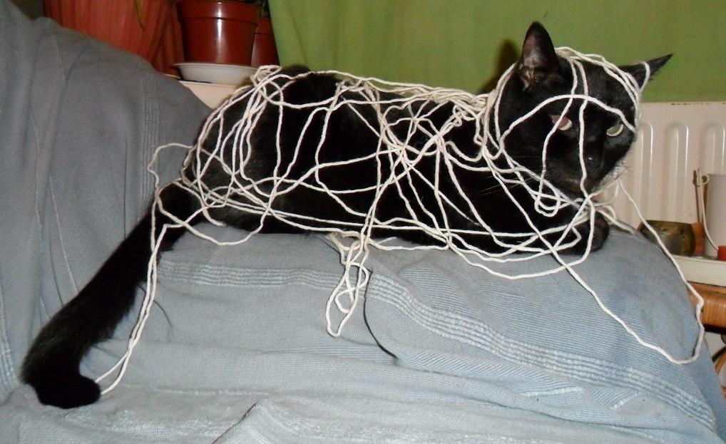 Wool-beats-cat