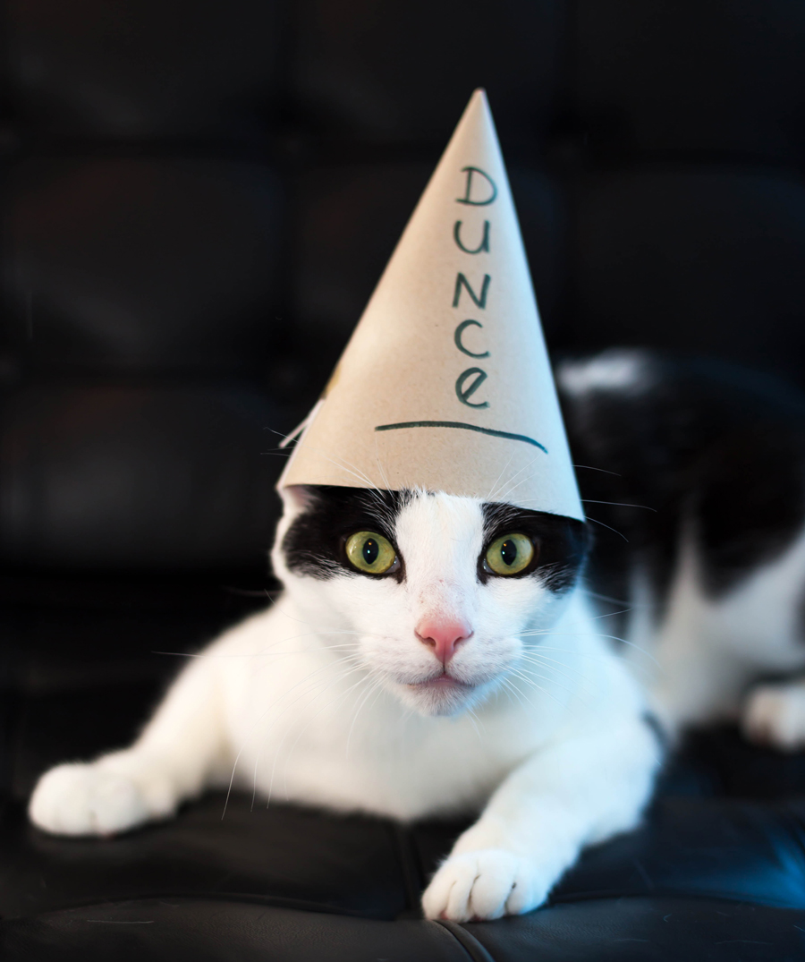 Dunce-Day-2