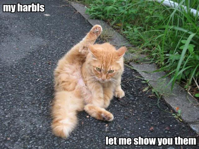 my-harbls-let-me-show-you-them